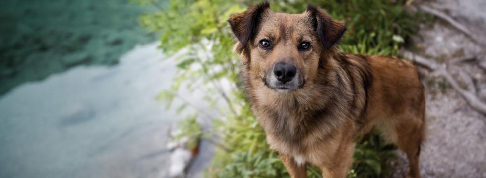 Geeignet allergiker hunde für Welche Hunde
